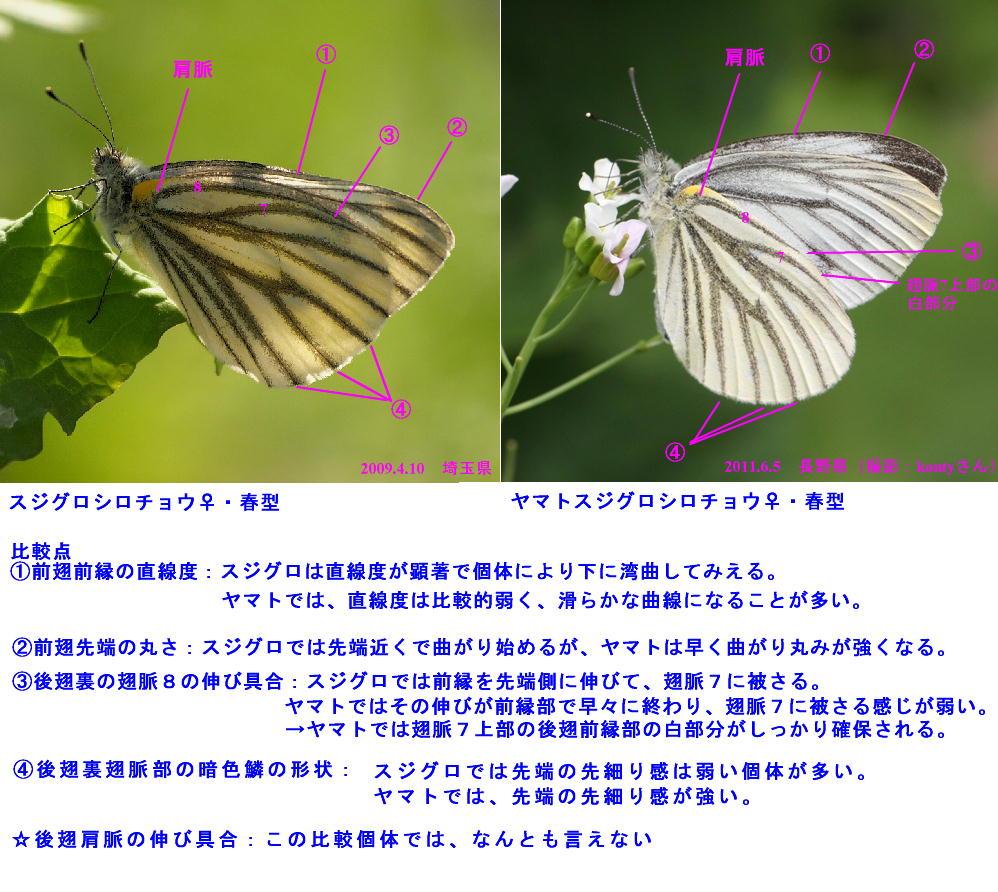 a0146869_74976.jpg