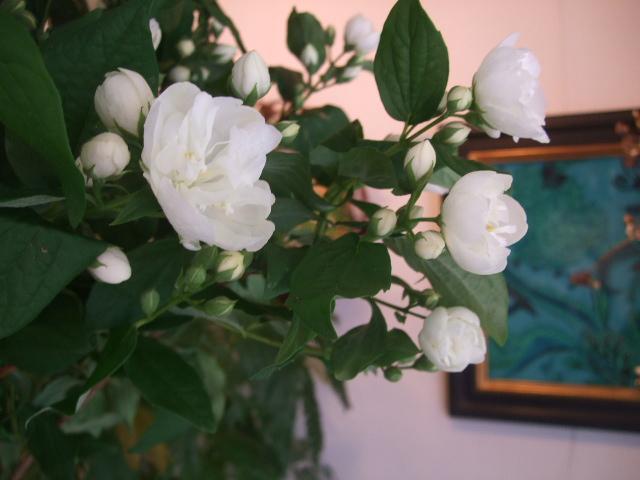 オークリーフ(紫陽花の季節)_f0049672_14113412.jpg