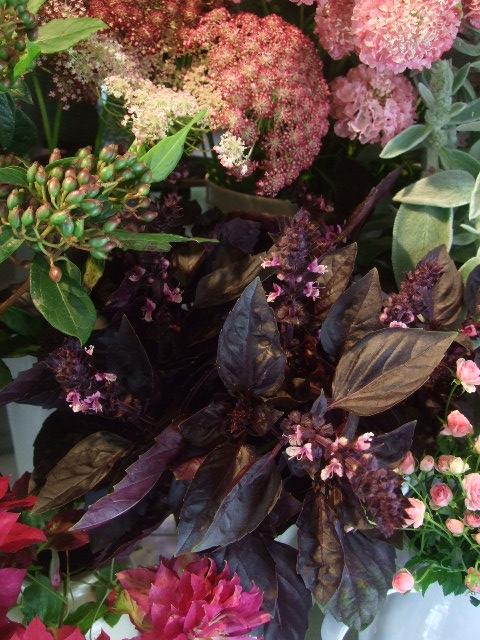 オークリーフ(紫陽花の季節)_f0049672_14124254.jpg