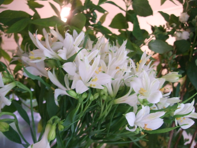オークリーフ(紫陽花の季節)_f0049672_14154056.jpg