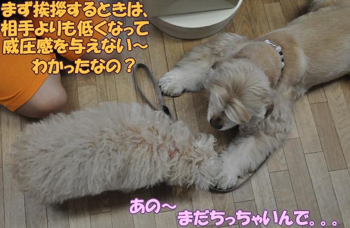 b0067012_0244195.jpg