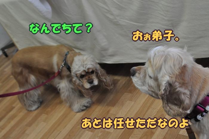 b0067012_0282336.jpg