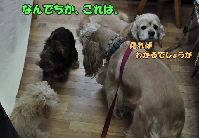 b0067012_0284454.jpg