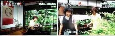 ぎゃらりー野草の庭_e0122219_16481144.jpg