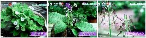 ぎゃらりー野草の庭_e0122219_16533948.jpg