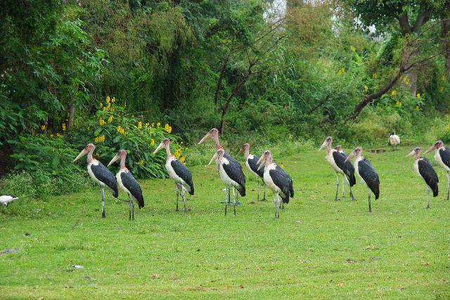 エチオピア(84) ズワイ湖の風景_c0011649_23482556.jpg