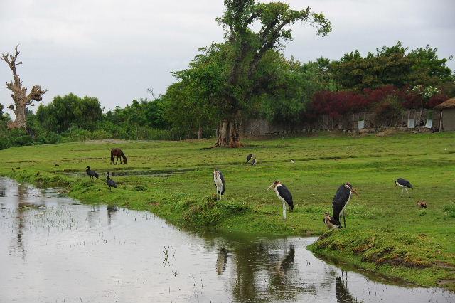 エチオピア(84) ズワイ湖の風景_c0011649_2349161.jpg