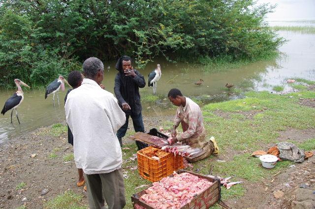 エチオピア(84) ズワイ湖の風景_c0011649_2351355.jpg