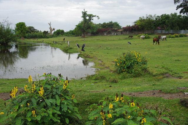エチオピア(83) ウォンドゲネットからズワイ湖へ_c0011649_6484820.jpg