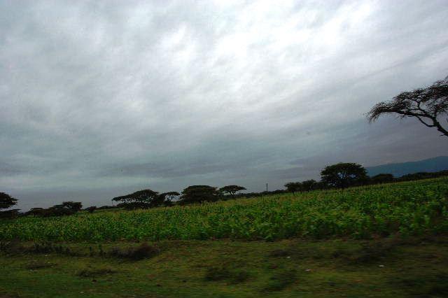 エチオピア(83) ウォンドゲネットからズワイ湖へ_c0011649_648548.jpg