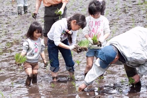 田植え体験&菜の花巡りツアー_b0147354_1936484.jpg