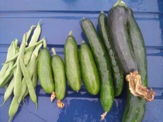 夏野菜たっぷり中華風ハンバーグ!_e0159969_198162.jpg
