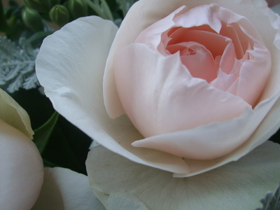 オークリーフ(淡いピンクの花)_f0049672_16155198.jpg