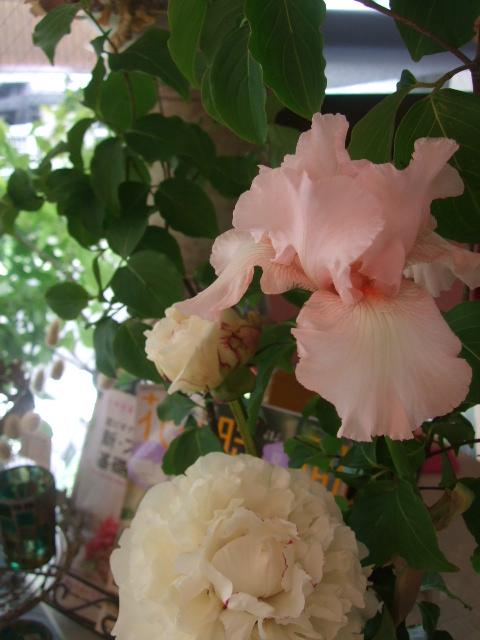 オークリーフ(淡いピンクの花)_f0049672_16201688.jpg