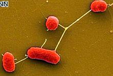 法医学的証拠によりヨーロッパのスーパー大腸菌はバイオテクノロジーで製作されたことが判明 Mike Adams_c0139575_0334722.jpg