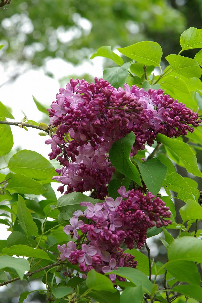 花の季節_a0107184_228335.jpg