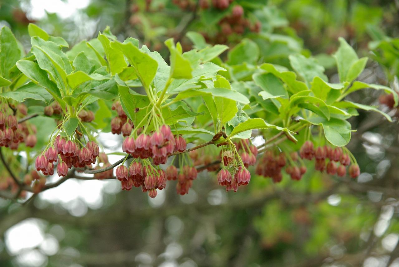 花の季節_a0107184_2291881.jpg