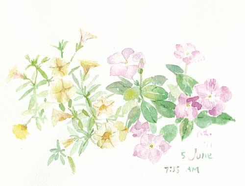 6月の庭 5_d0115092_7373327.jpg
