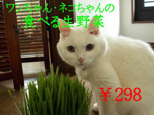 f0032418_216661.jpg