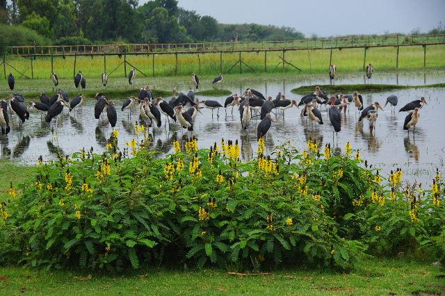 エチオピア(84) ズワイ湖の風景_c0011649_012158.jpg