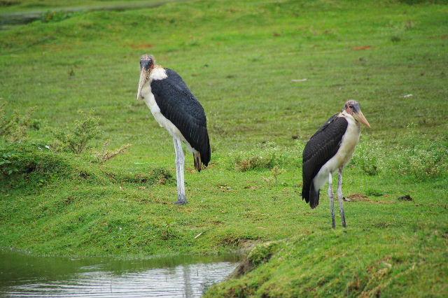 エチオピア(84) ズワイ湖の風景_c0011649_022100.jpg