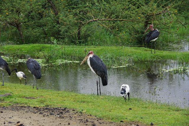エチオピア(84) ズワイ湖の風景_c0011649_034626.jpg
