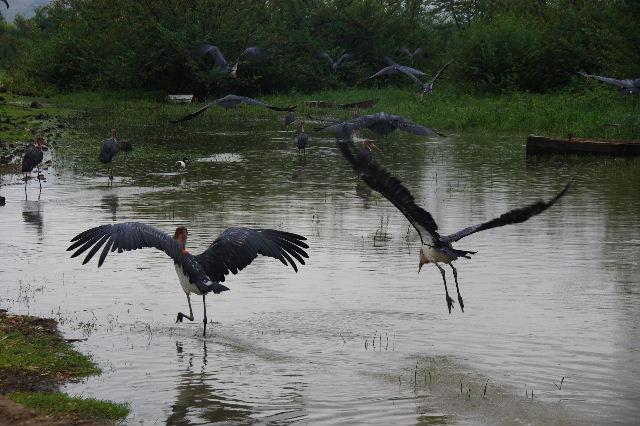 エチオピア(84) ズワイ湖の風景_c0011649_064175.jpg