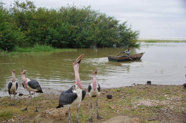 エチオピア(84) ズワイ湖の風景_c0011649_074745.jpg