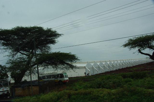 エチオピア(85) ズワイ湖からアジスアベバへ、そして帰国_c0011649_5453018.jpg