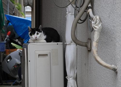 駐車場の猫たち_a0032559_19593188.jpg