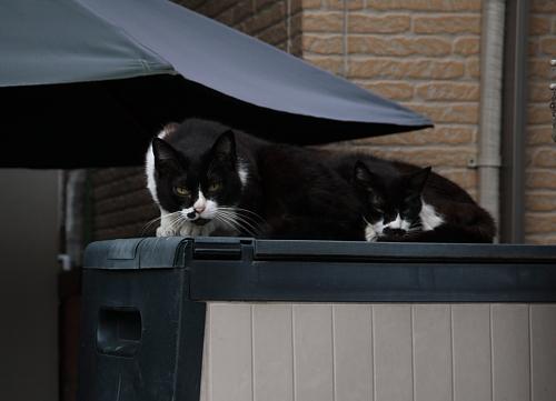 駐車場の猫たち_a0032559_19594918.jpg