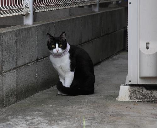駐車場の猫たち_a0032559_2001140.jpg