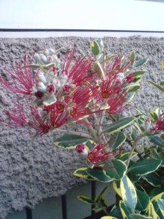 咲きました!_f0204368_23221773.jpg