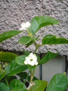 咲きました!_f0204368_23225488.jpg