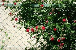 風街ろまん いい匂い 123 「正しいロックンロール」_c0121570_14576.jpg