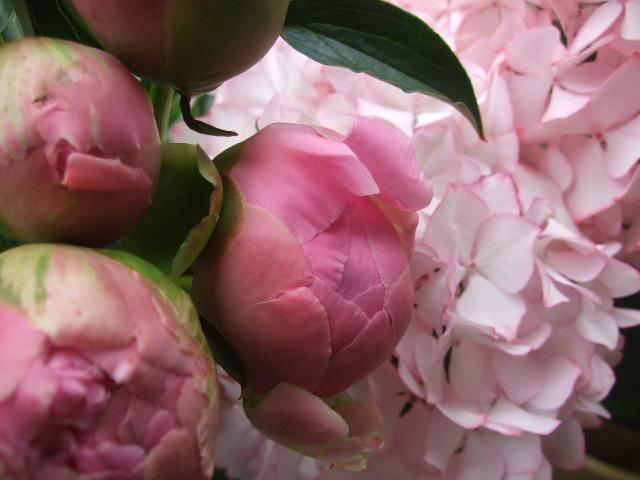 オークリーフ(ホタルブクロの咲く季節)_f0049672_1855183.jpg
