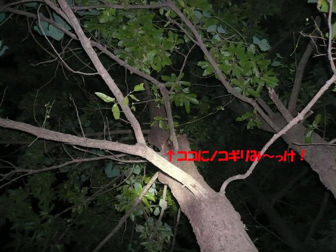 f0183484_2135298.jpg