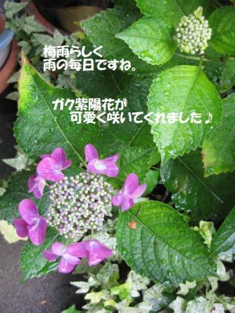 f0143386_20253292.jpg