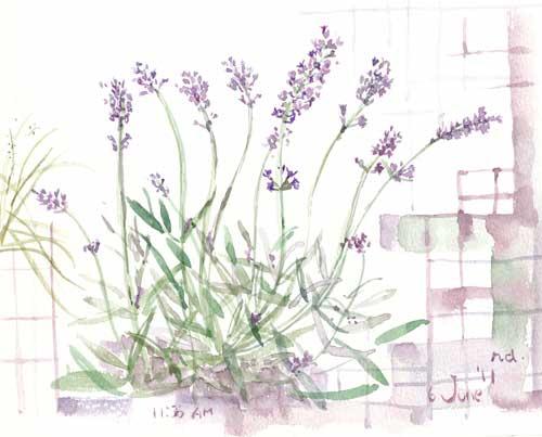 6月の庭 6_d0115092_7543090.jpg