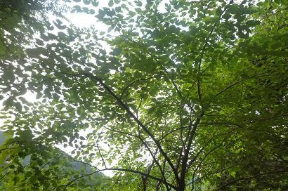 緑膨張す。_d0087595_6565194.jpg