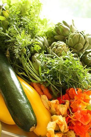 元気野菜たち_b0107003_11395050.jpg