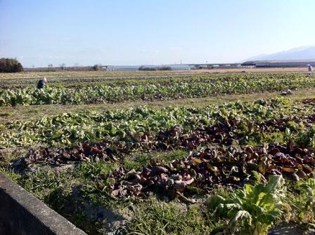 元気野菜たち_b0107003_1140840.jpg