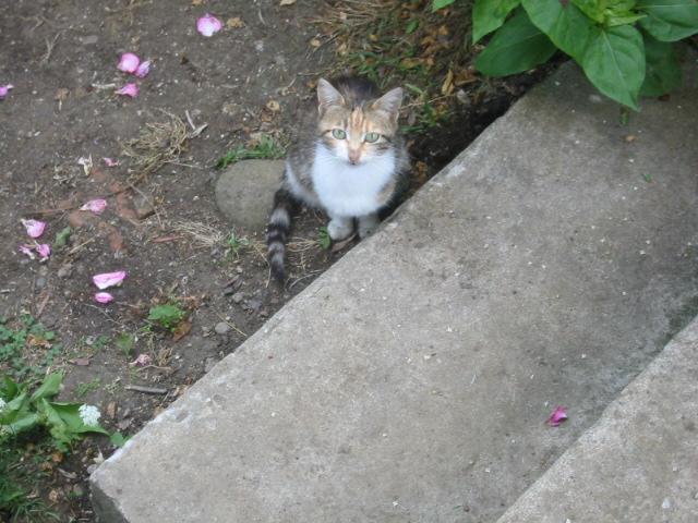猫との出会い  トルコの猫_a0002105_15363583.jpg