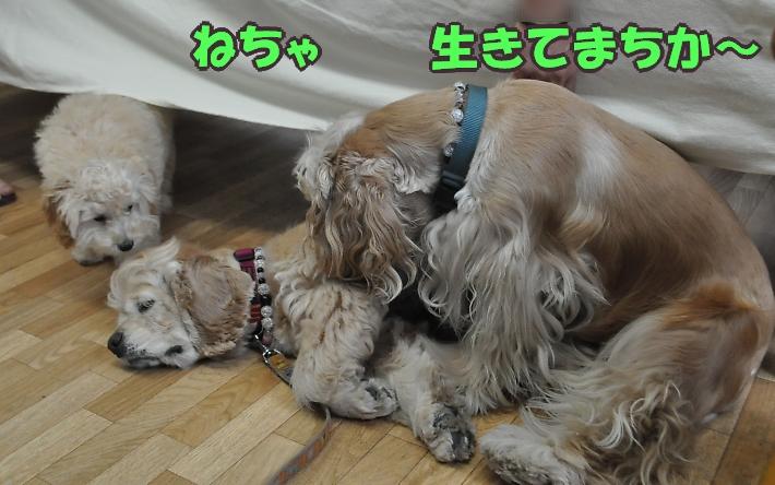 b0067012_0241789.jpg