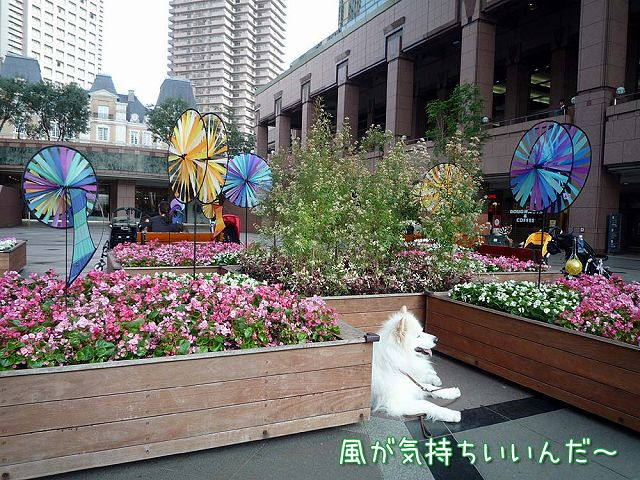 我が街お散歩♪_c0062832_672675.jpg
