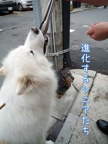 我が街お散歩♪_c0062832_674641.jpg