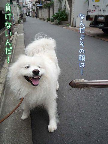 我が街お散歩♪_c0062832_675735.jpg
