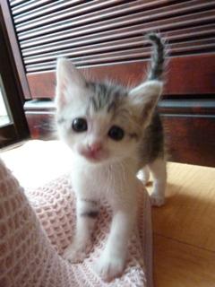 そと猫のお友だち ぐれちゃん編。_a0143140_1950939.jpg