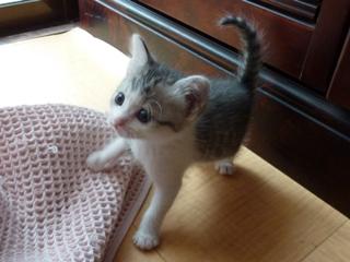 そと猫のお友だち ぐれちゃん編。_a0143140_19512684.jpg