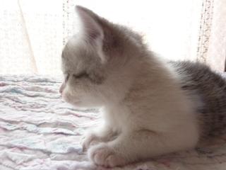 そと猫のお友だち ぐれちゃん編。_a0143140_19534540.jpg